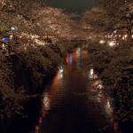 目黒川の夜桜クルーズに行こう!ツアーにする?貸切にする?